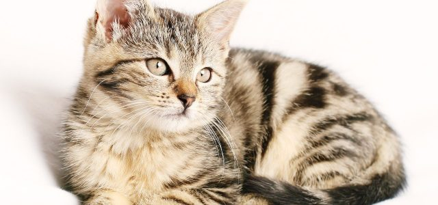 Comment donner un vermifuge à un chat?
