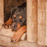 Comment construire une niche pour chien?